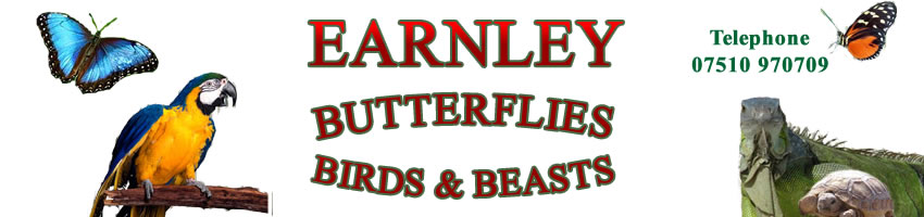 Earnley Butterflies, Birds and Beasts